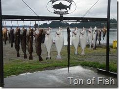 Lots a fish