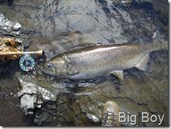 Big Chinook