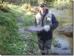 Native Steelie