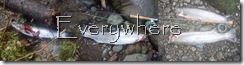 Damons fish