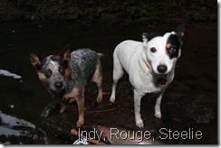 Indy, Rouge, Steelie